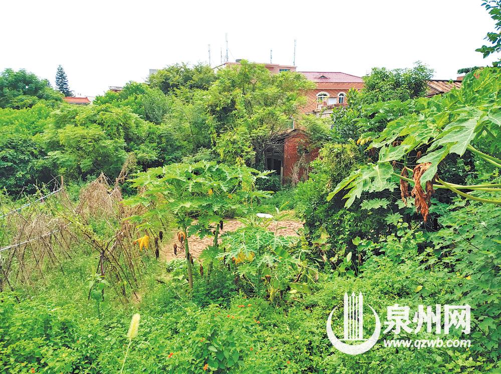 南安文庙残存几乎被茂密树林和草丛所遮蔽,仅露出一角。