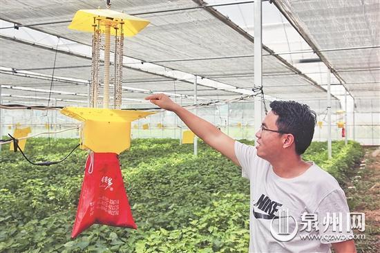 惠安惠民特菜生产 迈入智能时代