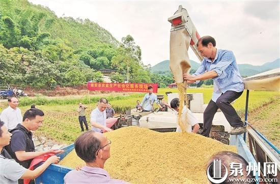 """微信代运营收费标准:泉州推广农业生产社会化服务 水稻也能""""托管"""" 荒地变回良田"""