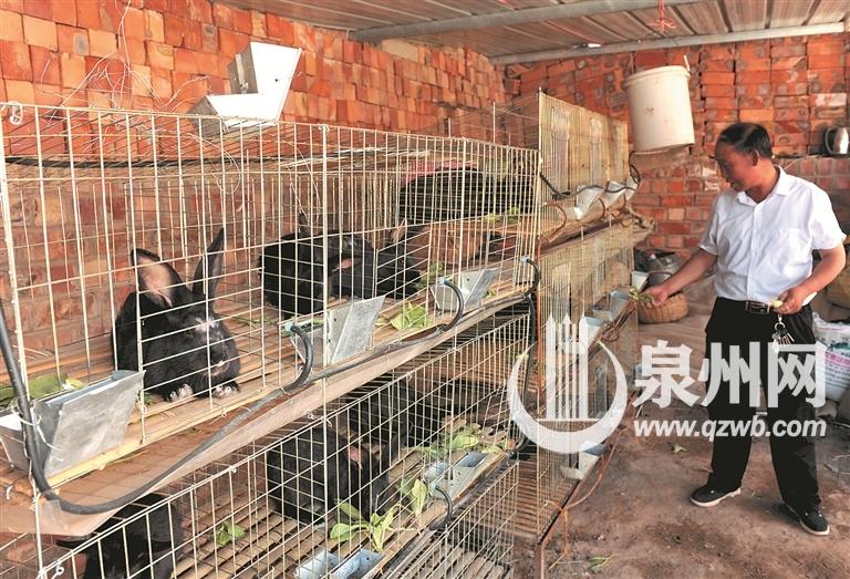 养殖户赵珍元在用青菜喂养黑兔