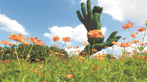 泉州市区滨海公园:又一片花海绽放